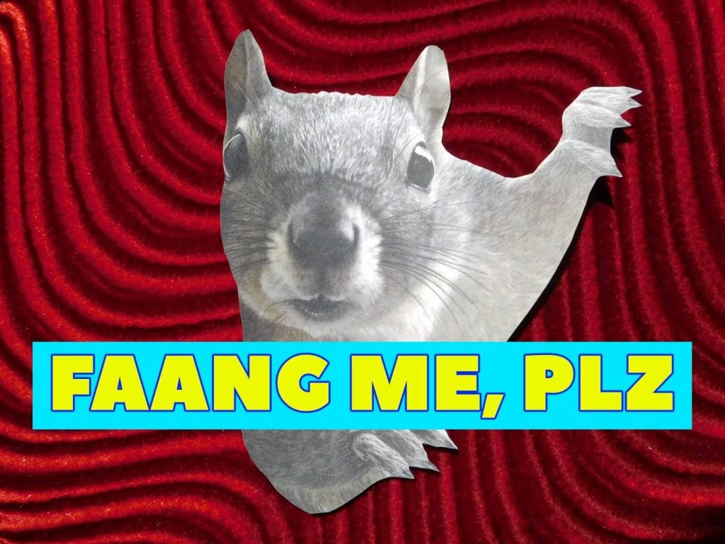 red swirly background with squirrel staring at screen with overlay text FAANG me, plz