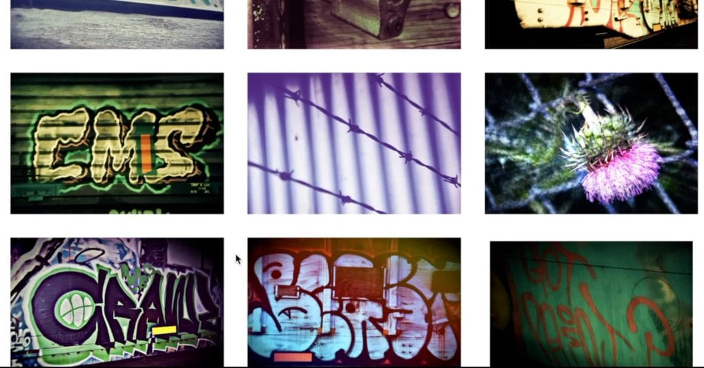 Image gallery of graffiti and railyard images including a prickly flower and barbed wire fence